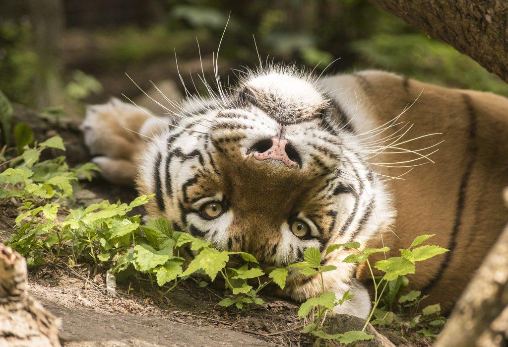 zoo di odense