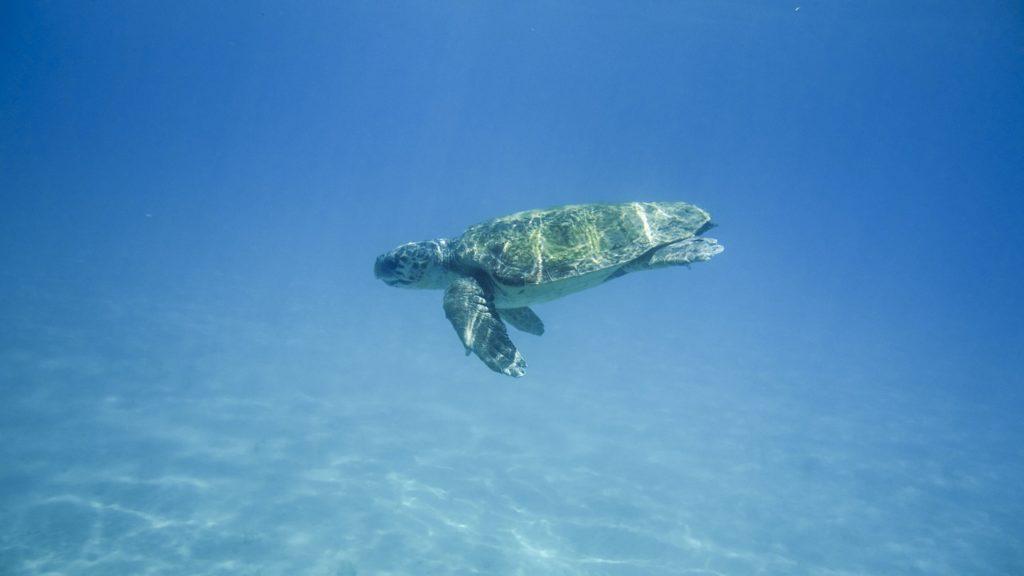 tartarughe zante foto